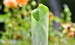 Browse partner 1555493957924 banana leaf 3552292 1920