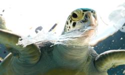 Browse partner biodegradable plastics 1600x600