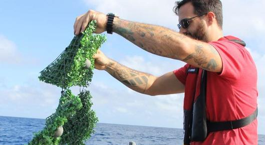 Partner show researchers find new way to predict where ocean trash seaweed will go