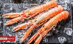 Browse partner  108025832 langoustine