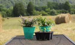 Browse partner 4 this biodegradable flower pot can be planted
